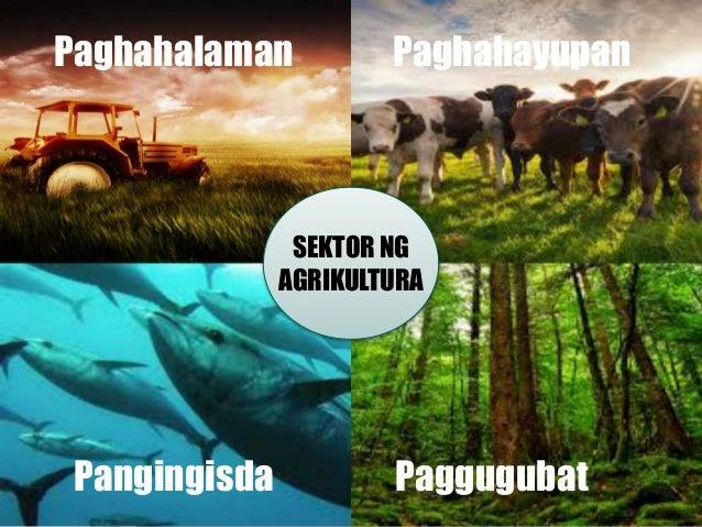 SEKTOR NG AGRIKULTURA Paghahalaman Paghahayupan Pangingisda Paggugubat
