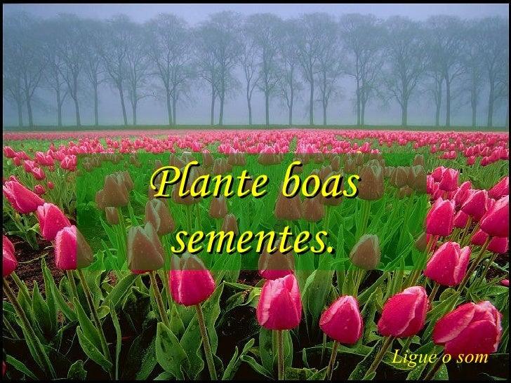 Plante boas sementes. Ligue o som