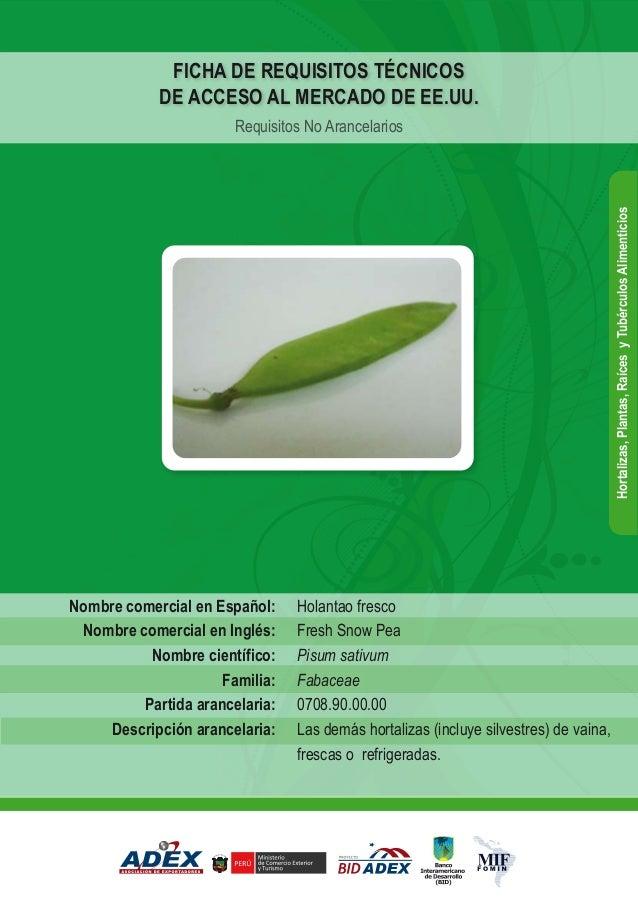 Holantao fresco Fresh Snow Pea Pisum sativum Fabaceae 0708.90.00.00 Las demás hortalizas (incluye silvestres) de vaina, fr...