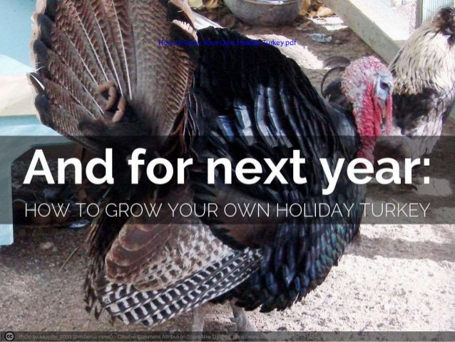 How to Grow Your Own Holiday Turkey pdf  Photo by inkknife_2000 (2 million + views) - Creative Commons Attribution-ShareAl...