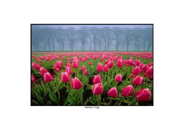 Holland_01.jpg