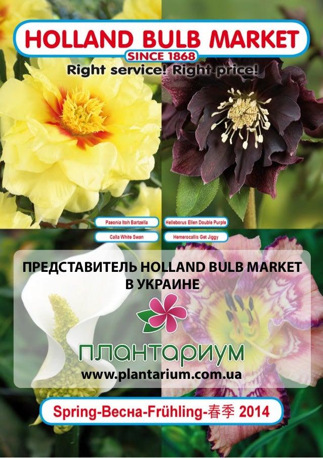 ПРЕДСТАВИТЕЛЬ HOLLAND BULB MARKET В УКРАИНЕ  www.plantarium.com.ua