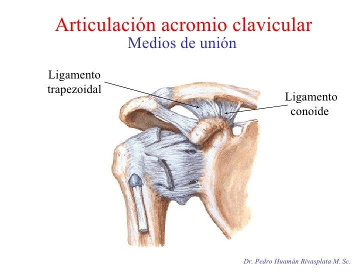 Articulación acromio clavicular Medios de unión Dr. Pedro Huamán Rivasplata M. Sc. Ligamento trapezoidal Ligamento conoide
