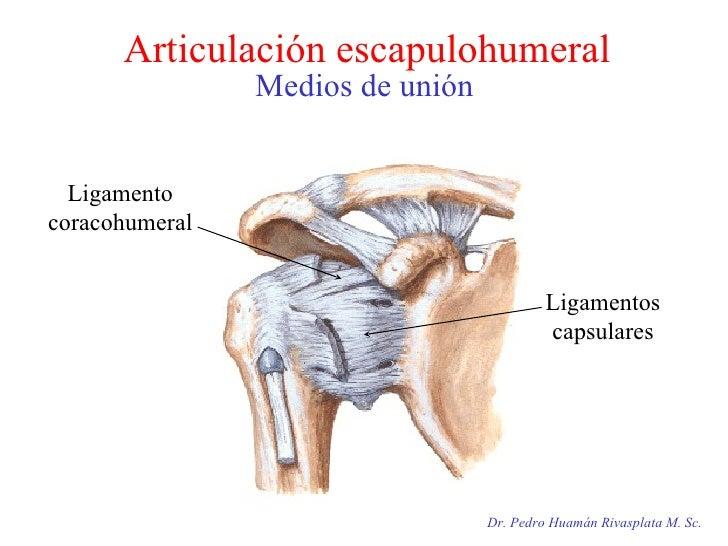 Articulación escapulohumeral Medios de unión Dr. Pedro Huamán Rivasplata M. Sc. Ligamento coracohumeral Ligamentos capsula...