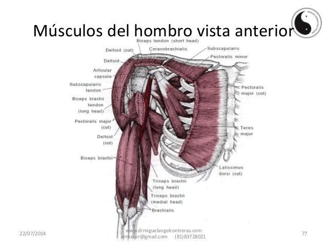 Hombro doloroso, causas, trigger points de los musculos cercanos al h…