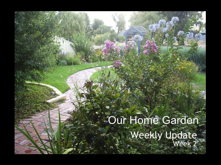 Our Home Garden Weekly Update Week 2