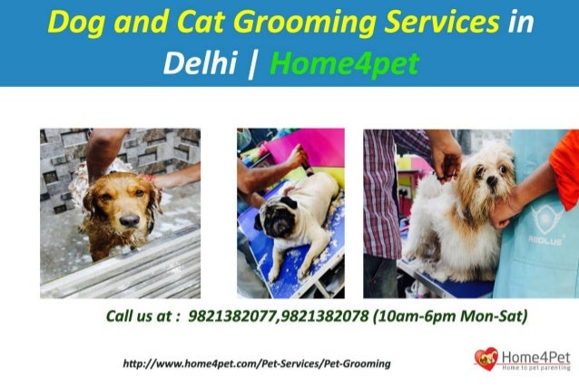 Dog And Cat Grooming Services In Delhi Home4pet