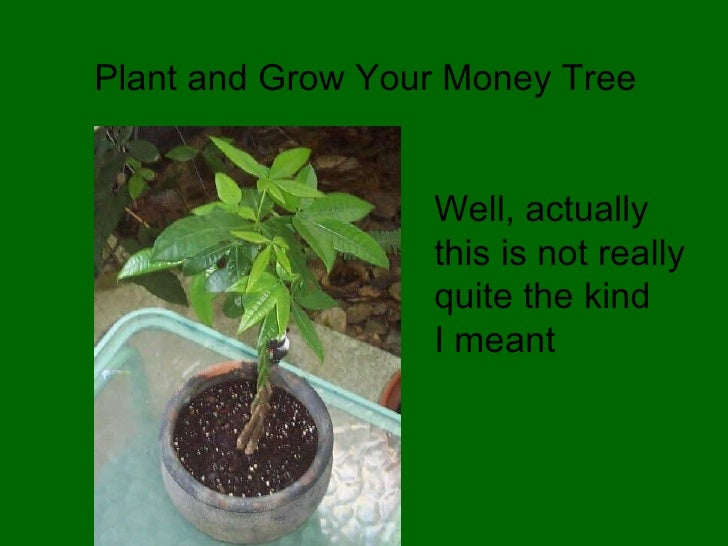 Plant and Grow Your Money Tree Well, actually this is not really quite the kind I meant