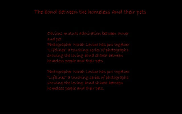 The bond between the homeless and their pets-By Norah Levine Slide 2