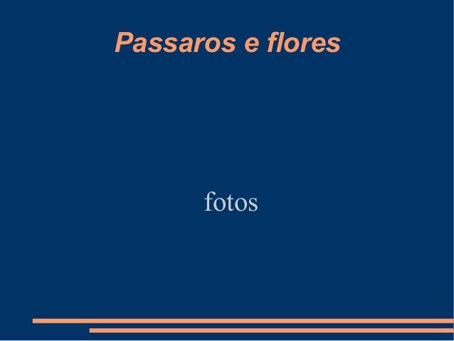 Passaros e flores fotos