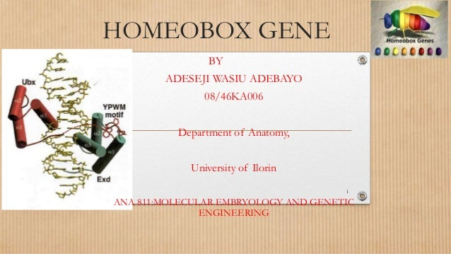 HOMEOBOX GENE BY ADESEJI WASIU ADEBAYO 08/46KA006 Department of Anatomy, University of Ilorin ANA 811:MOLECULAR EMBRYOLOGY...