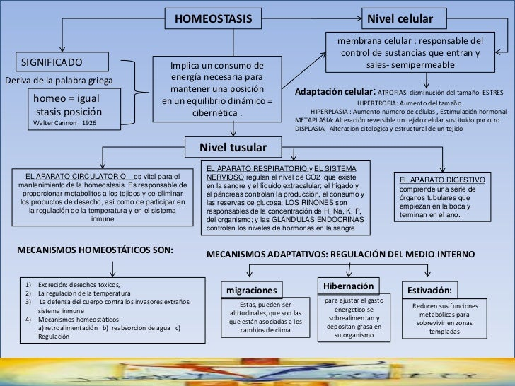 HOMEOSTASIS<br />Nivel celular<br />membrana celular : responsable del control de sustancias que entran y sales- semiperme...