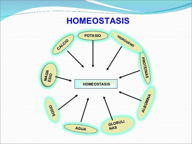 La homeostasis - La sangre y la linfa