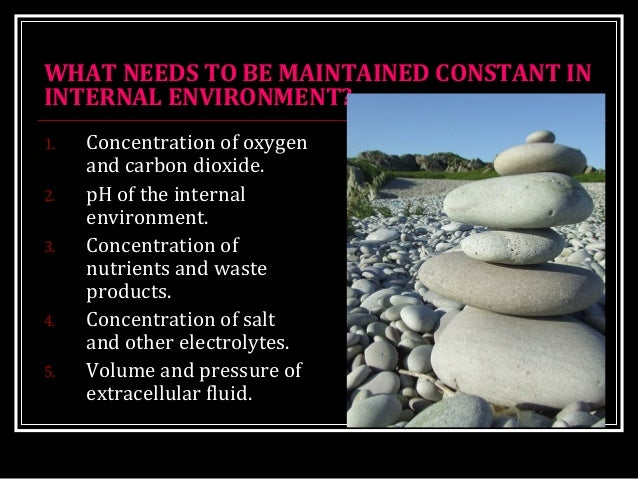 WHAT NEEDS TO BE MAINTAINED CONSTANT IN INTERNAL ENVIRONMENT? 1. Concentration of oxygen and carbon dioxide. 2. pH of the ...
