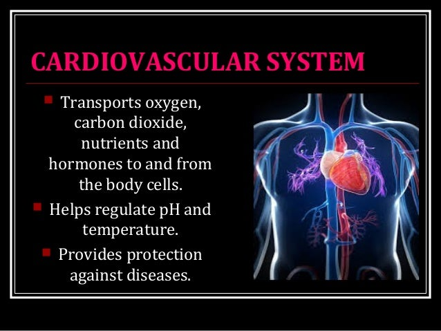 CARDIOVASCULAR SYSTEM  Transports oxygen, carbon dioxide, nutrients and hormones to and from the body cells.  Helps regu...