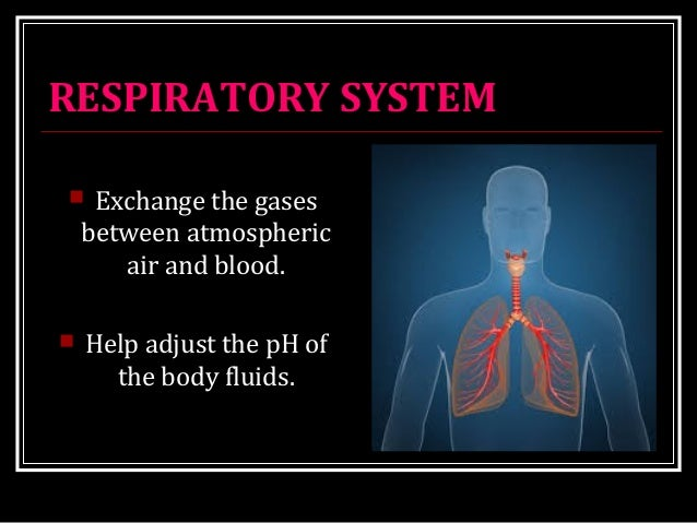 RESPIRATORY SYSTEM  Exchange the gases between atmospheric air and blood.  Help adjust the pH of the body fluids.