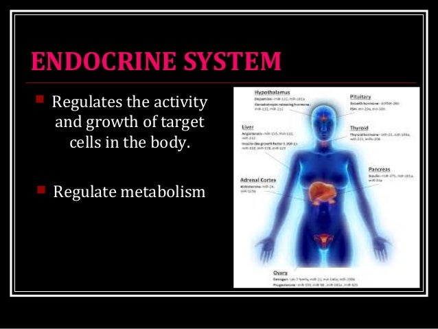 ENDOCRINE SYSTEM  Regulates the activity and growth of target cells in the body.  Regulate metabolism