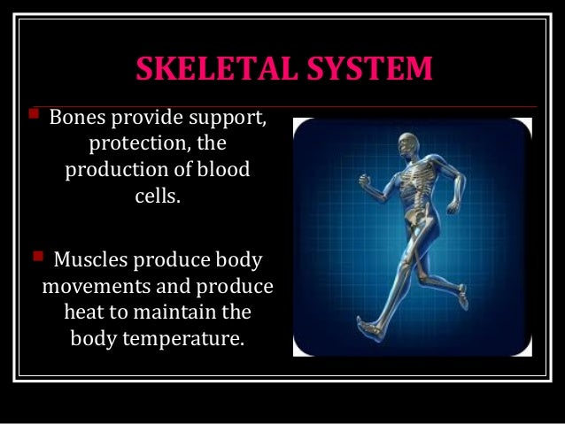 SKELETAL SYSTEM  Bones provide support, protection, the production of blood cells.  Muscles produce body movements and p...