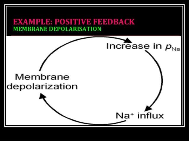 EXAMPLE: POSITIVE FEEDBACKEXAMPLE: POSITIVE FEEDBACK MEMBRANE DEPOLARISATIONMEMBRANE DEPOLARISATION