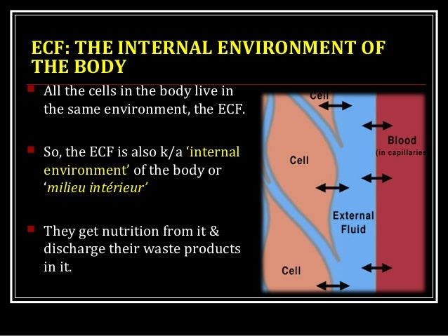ECF: THE INTERNAL ENVIRONMENT OF THE BODY  All the cells in the body live in the same environment, the ECF.  So, the ECF...