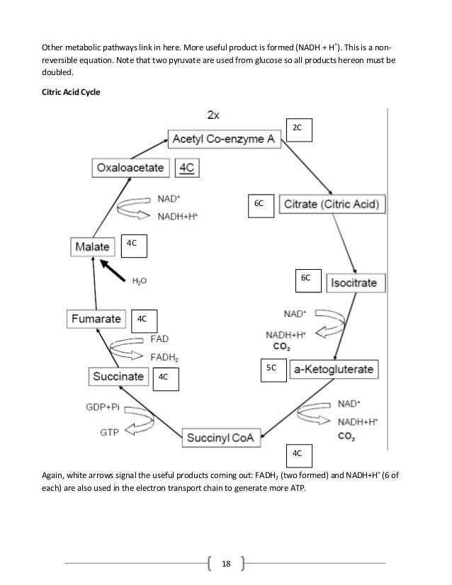 18 Other metabolic pathways link in here. More useful product is formed (NADH + H+ ). This is a non- reversible equation. ...