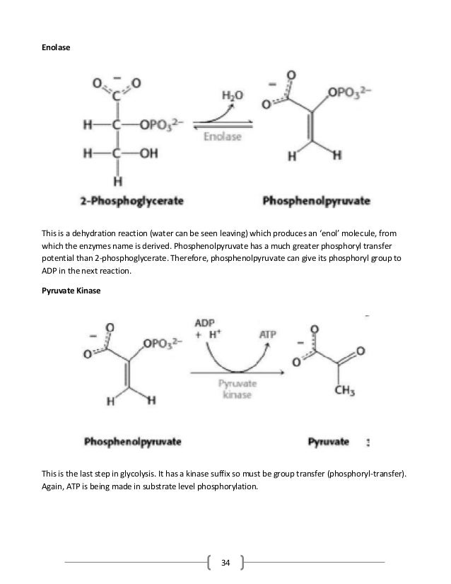 34 Enolase This is a dehydration reaction (water can be seen leaving) which produces an 'enol' molecule, from which the en...
