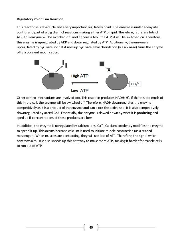 40 Regulatory Point: Link Reaction This reaction is irreversible and a very important regulatory point. The enzyme is unde...