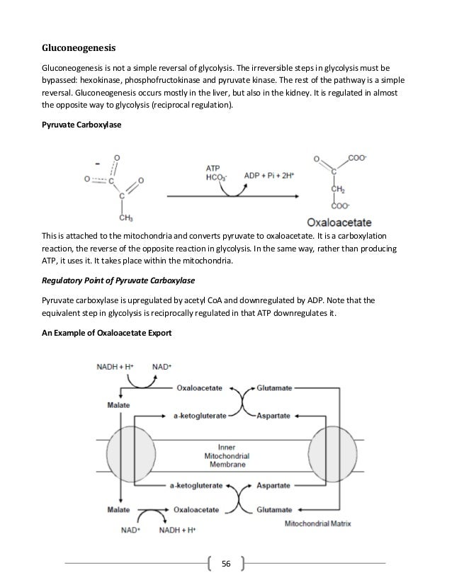56 Gluconeogenesis Gluconeogenesis is not a simple reversal of glycolysis. The irreversible steps in glycolysis must be by...