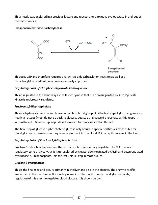 57 This shuttle was explored in a previous lecture and reoccurs here to move oxaloacetate in and out of the mitochondria. ...