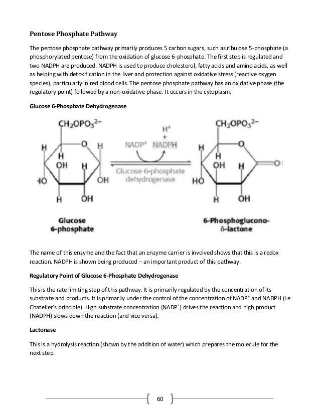 60 Pentose Phosphate Pathway The pentose phosphate pathway primarily produces 5 carbon sugars, such as ribulose 5-phosphat...