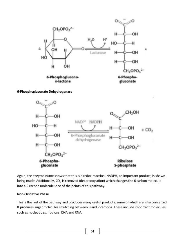 61 6-Phosphogluconate Dehydrogenase Again, the enzyme name shows that this is a redox reaction. NADPH, an important produc...