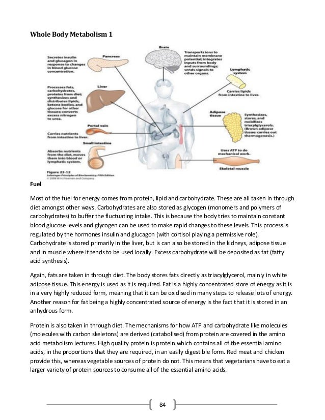 Homeostasis Panel Revision Guide