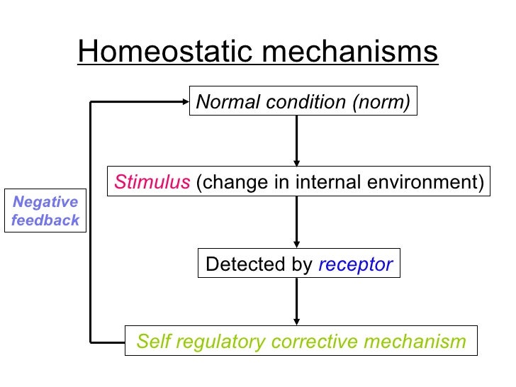 homeostatic mechanism What is homeostasis in the context of the anatomy and physiology of the human body  topics on this page include control of homeostasis, how feedback mechanisms act to maintain homeostasis, examples of homeostasis, how homeostasis affects disorders, diseases and conditions within the body.
