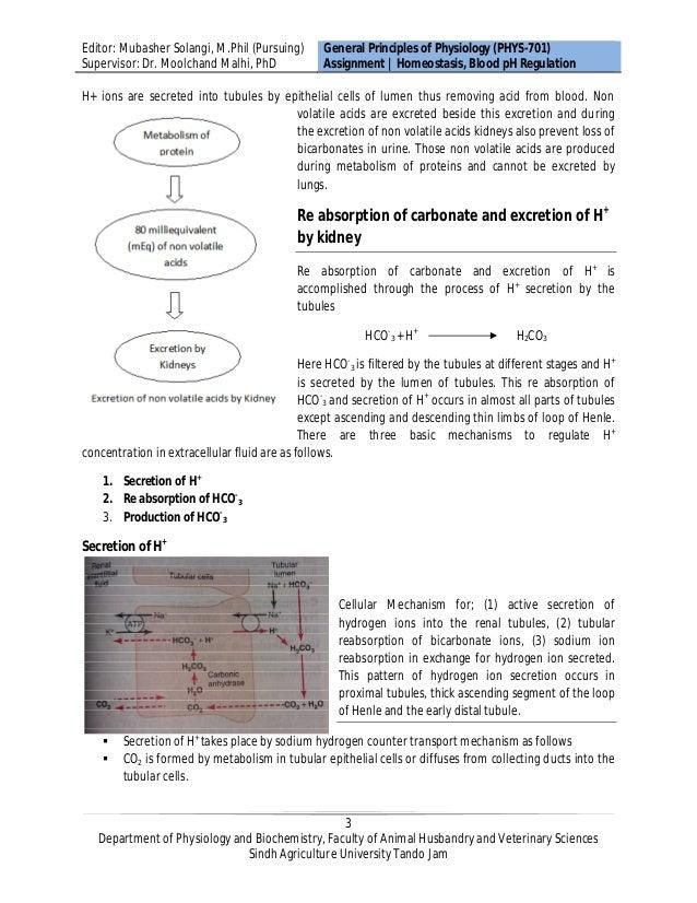 Homeostasis Maintenance Of Blood Ph