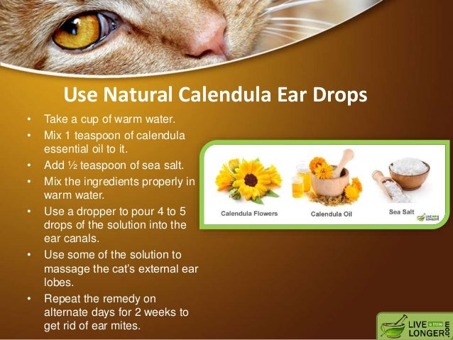 how to get rid of ear mites in feral cats