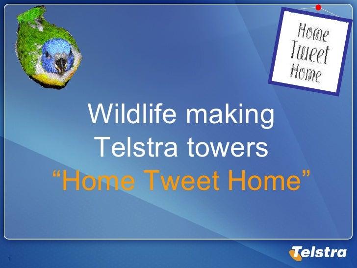 """Wildlife making Telstra towers """"Home Tweet Home"""""""
