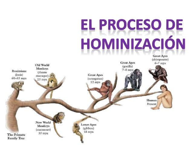 El proceso de hominización es la progresiva adquisición de las características que acabaron diferenciando a los homínidos ...