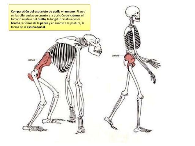 Algunos de los cambios que se producen en el cráneo son: • Desaparición de la cresta sagital: Desaparece a medida que se a...