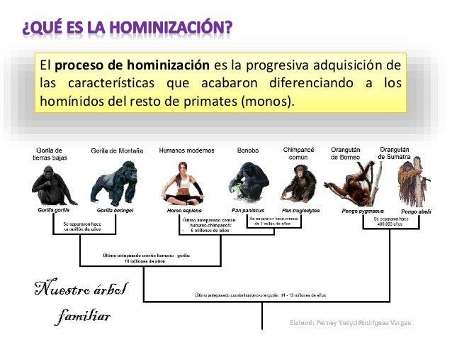 Hominización Cambios Morfológicos Cráneo y Rostro Columna vertebral Pelvis Extremidades Cambios fisiológicos Alimentación ...