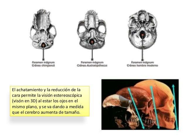 La construcción de instrumentos impulsó el proceso de hominización al potenciar el desarrollo del encéfalo. El modo de vid...