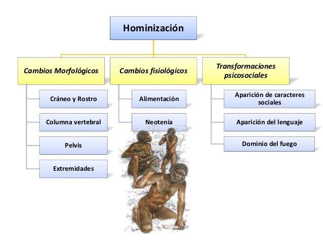 Los primeros homínidos se formaron hace unos 5 - 6 millones de años, debido posiblemente a los cambios climáticos que afec...