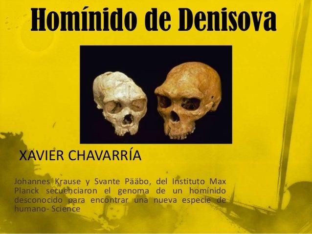 Homínido de Denisova XAVIER CHAVARRÍAJohannes Krause y Svante Pääbo, del Instituto MaxPlanck secuenciaron el genoma de un ...