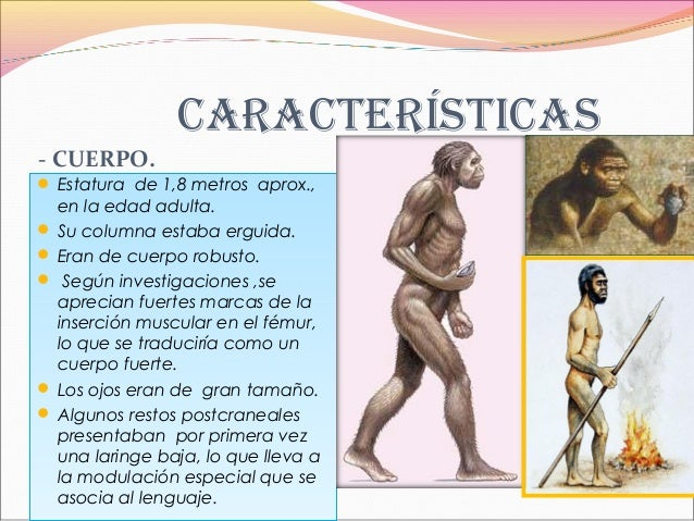 Homoerectus