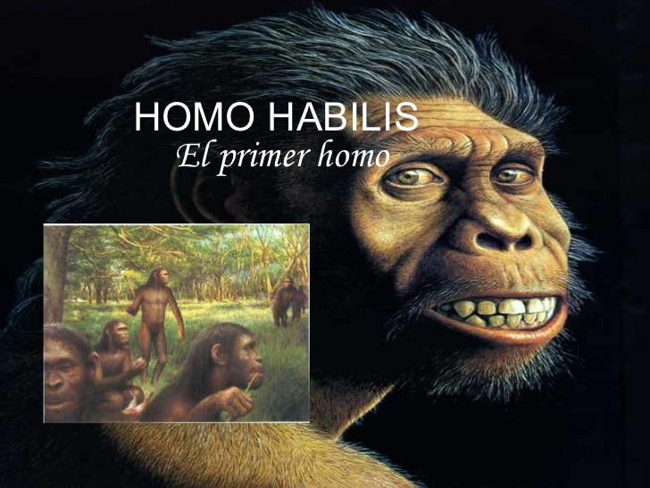 HOMO HABILIS El primer homo