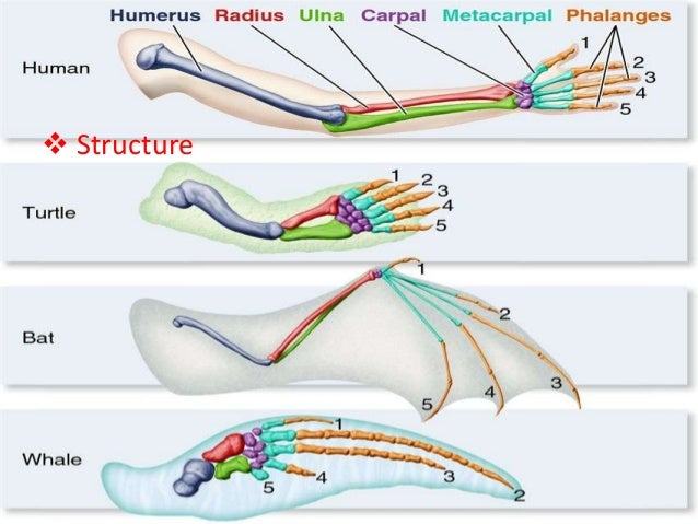 EcologyHomologous structure – Homologous Structures Worksheet