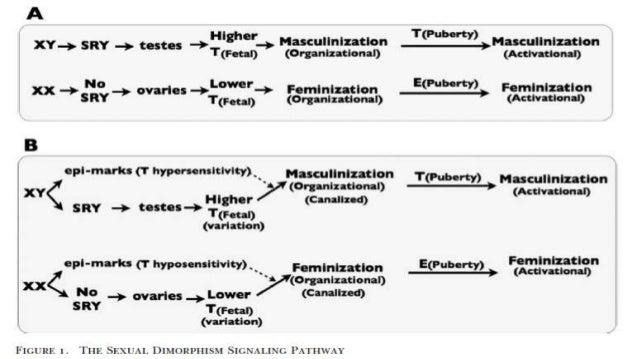 Epigenetic marks homosexuality