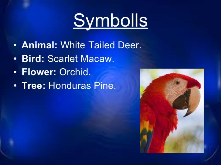 Image result for  white-tailed deer, the national bird is the scarlet macaw.