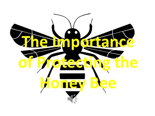 The Importanceof Protecting the   Honey Bee