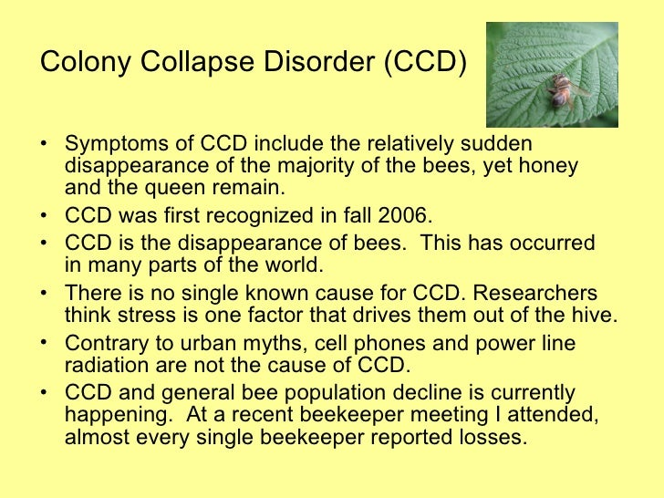 Decline of honey bees essay writer