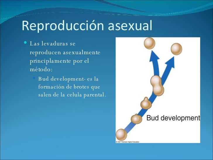 Basidiomicetes reproduccion asexual
